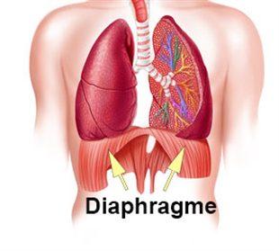 schéma médical du diaphragme